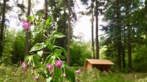 Guidet tur i Ravnebanke skov @ Skovmøllen